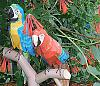 THE BIRDS (all things bird model related!)-2macaws1.jpg